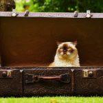 Baggage Allowance (bagaglio consentito)